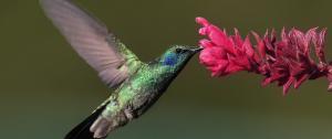 colibri-updated